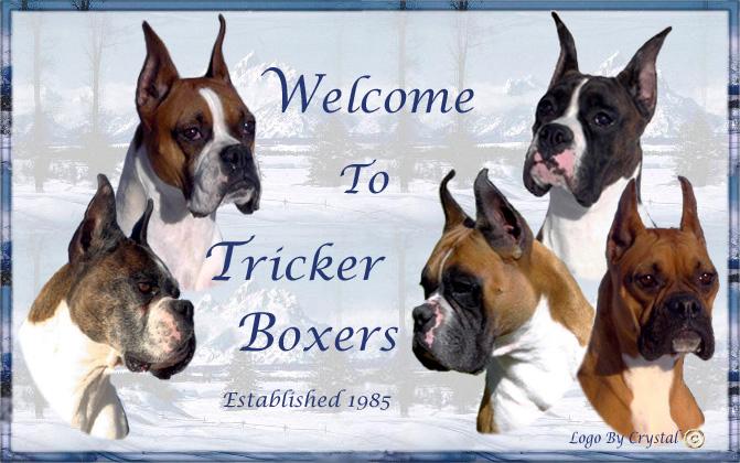 trickerboxerslogo.jpg