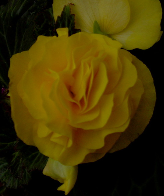 yellowflower.jpg